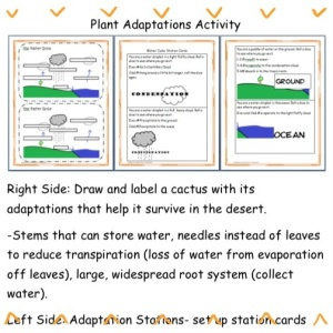 Plant Adaptations Stations