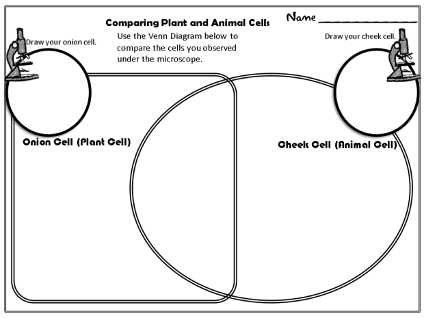Difference between plant and animal cells venn diagram animal cells comparing plant and animal cells diagram comparing cells venn ccuart Images