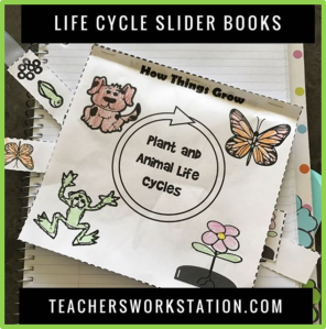 life cycles slider book